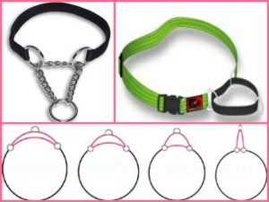 Tool: Martingale or Training Collar